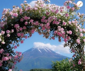 amazing, clouds, and flower image