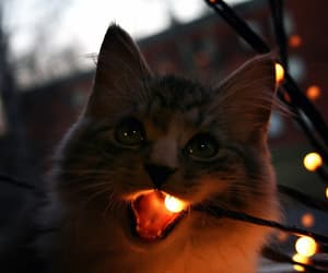cat, animal, and light image