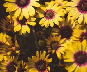blossom, yellow, and flowers image