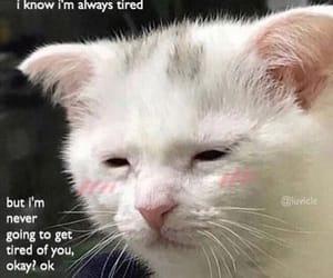 cat, kitten, and memes image