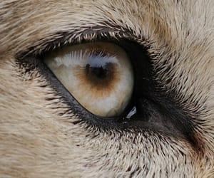 animal, theme, and eye image