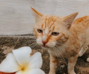 Animais, beautiful, and cat image