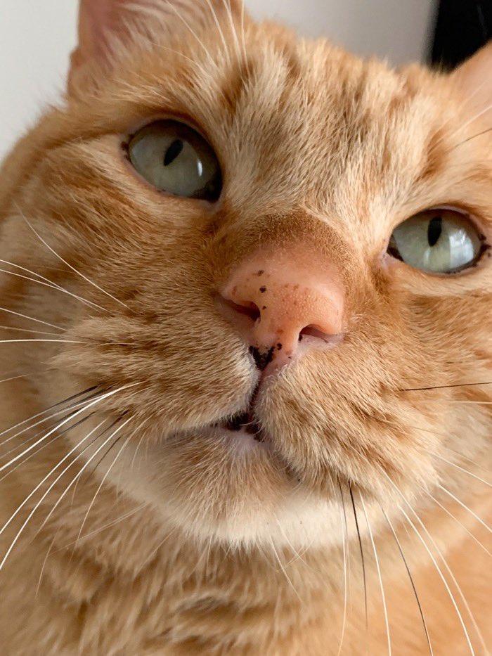 cat, close up, and mood image