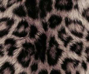 wallpaper, animal print, and background image