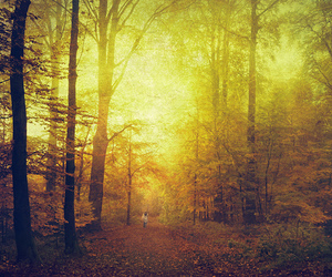 atmosphere, autumn, and forest image