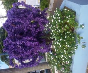 branco, flowers, and folhas image