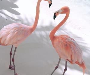 animal, flamingo, and beach image