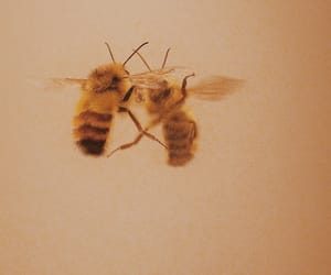 bee and yellow image