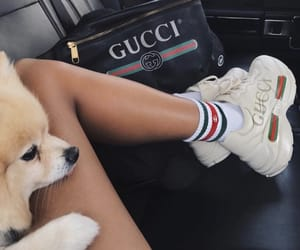 bag, luxury, and dog image