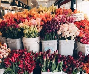 flowers, tulips, and rose image
