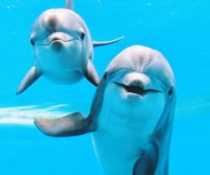 animals, blue, and dolphins image