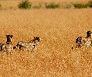 africa, nature, and cool image
