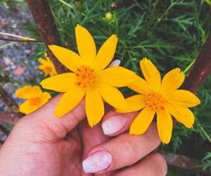 bloom, flourish, and flowes image