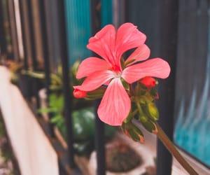 bloom, blossom, and fashion image