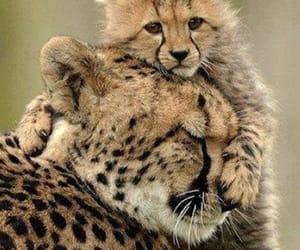 baby, hug, and tiger image