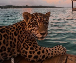 animal, leopard, and sea image