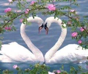 Swan, nature, and animals image