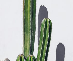 cactus and wallpaper image