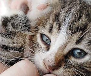 animals, cats, and Croatia image