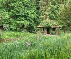 cottagecore, forest, and honeycore image