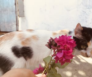beauty, bloom, and cat image