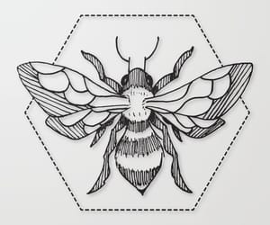 animals, bee, and black and white image