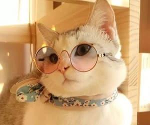 cat, cute cat, and dpz image