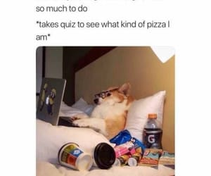 funny, pizza, and joke image