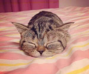Animales, gato, and cute image