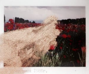 flowers, photograph, and glitter image