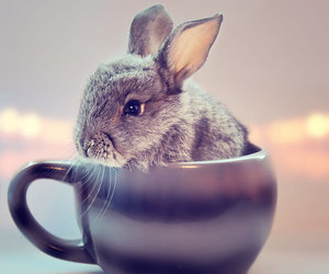 rabbit, cute, and cup image