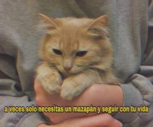 frases, Gatos, and quotes image