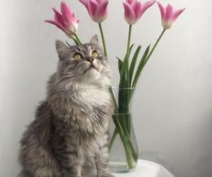 aesthetics, animals, and beauty image