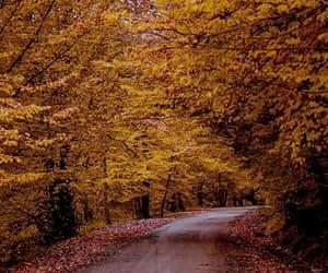 autumn, leaf, and path image
