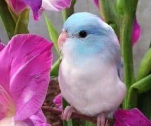 baby animal, baby bird, and bird image