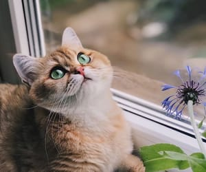 cat and photography image