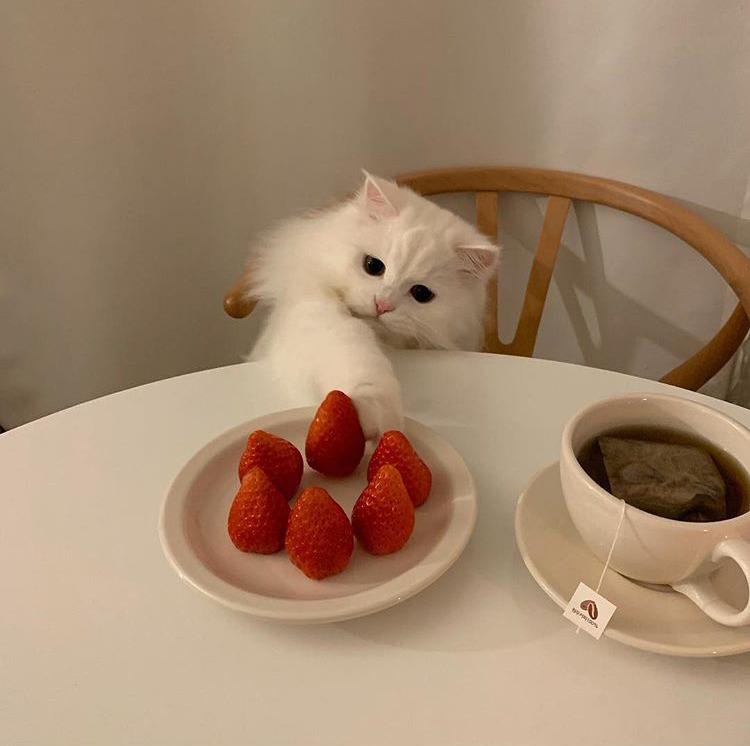 cat, minimalist, and strawberry image