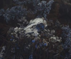 animal, oddities, and skull image