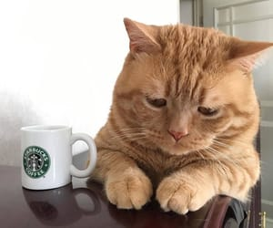 animal, cat, and coffee image