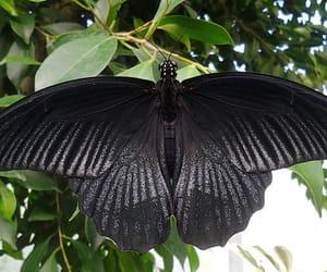 animals, black, and nature image