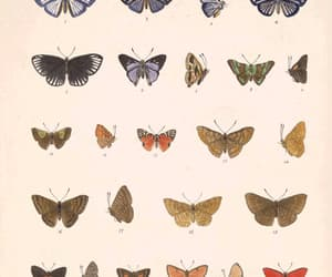 aesthetic, artistic, and butterflies image