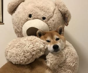 dog, aesthetic, and teddy image