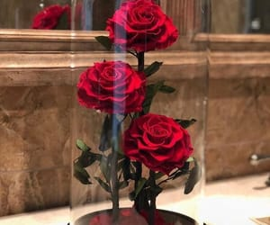 rose and red image