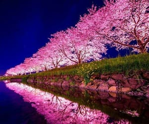 colorful, reflections, and pink image