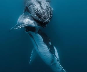 life, ocean, and whale image
