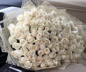 rose, flowers, and white roses image