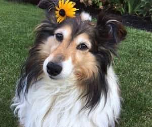 animal, mascota, and dog image