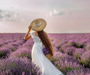 beauty, hat, and lavender image