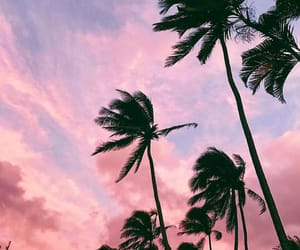 babe, coconut, and travel image