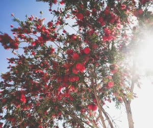 arbres, flower, and nature image